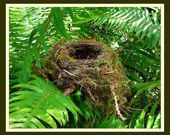 Nest In Plain Sight, A Fine Art Photograph of Wild Bird Nest Hidden Among Ferns Along The Trail