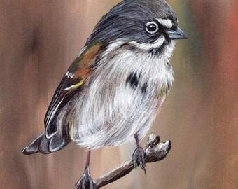 SALE Bird Art Painting Bells Sparrow SFA Wildlife Original hand painted bird acrylic painting by Australian Artist Janet M Graham