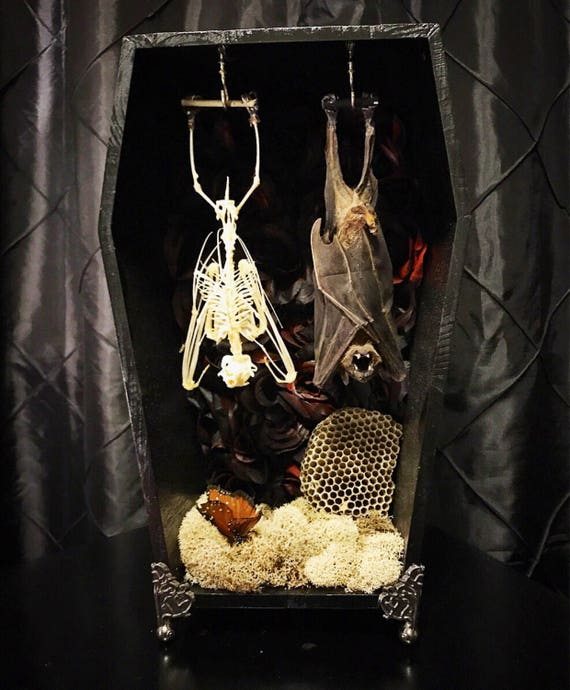 2 Hanging Bats In Wood Shadowbox Coffin