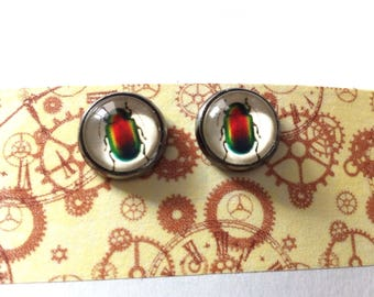Entomology steampunk cabochon earrings
