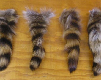 8 Raccoon Tails