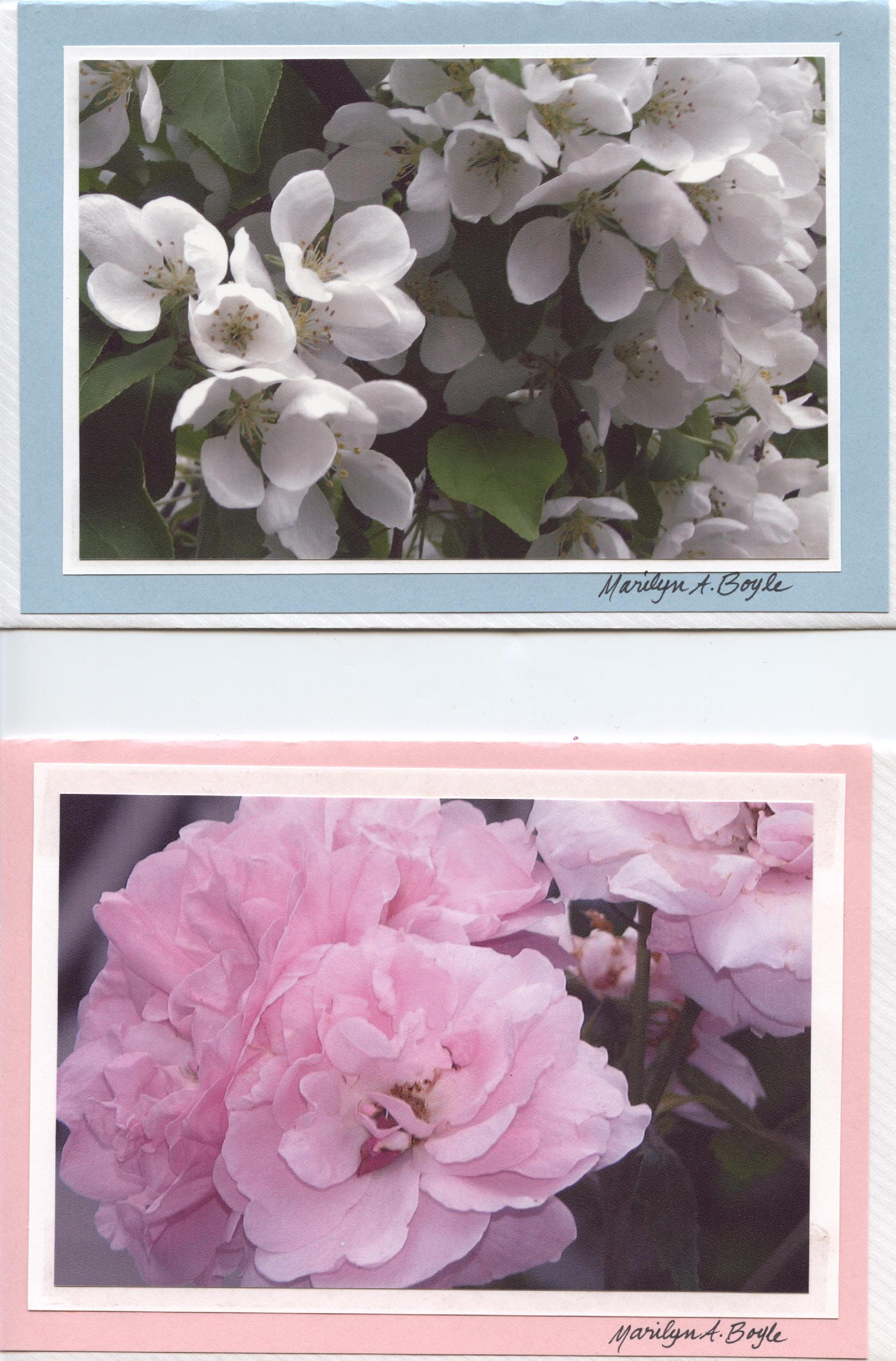Hand made flower cards 5 x 7 inches envelopes flower photos gallery photo gallery photo kristyandbryce Choice Image