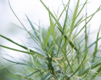 Green Nature Art, Botanical Print, Green Grass Leaf Photograph, Modern Wall Art, Green Decor, Spa Art, Bedroom Decor, Bath Art, Office Art