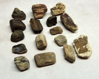"""16 Pieces of Petrified Wood 1/2"""" to 1"""" long for Fossil rocks, Petrified wood, Crafting, Assemblage, Geology, Rock collecting"""