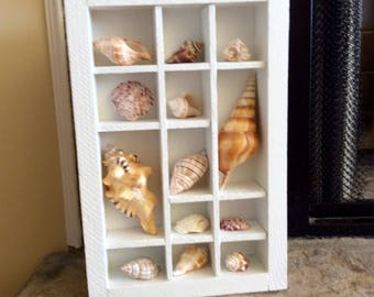 Seashell Shadow Box Etsy