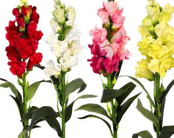 Snapdragon Seeds  Tall Mix,  Fresh seeds 0.50gr Aprox. 620 seeds