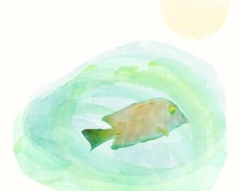 Fishes of Mafia
