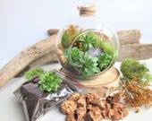 Green meadow succulent terrarium/Hens and Chicks Terrarium/Hanging glass terrarium