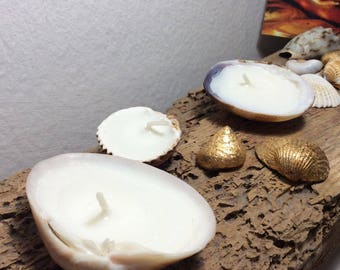 Shell Candle White