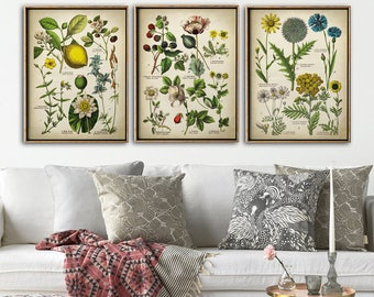 Botanical print set of 3, Botanical Set, flower print set of medicinal plants, botanical poster, botanical wall decor, lollypop, lemon tree