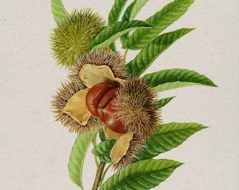 Jujube Tree, Jujube, fruit, Home Décor, Wall Printable, Wall Art, Digital Download, Printable Art, Wall Decoration.