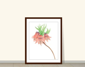 Red Crown Imperial Fritillaria Imperialis, Flower Botanical Print, Flower Art Print, Floral Art, Wild Flower, Fritillaria Imperialis, Poster