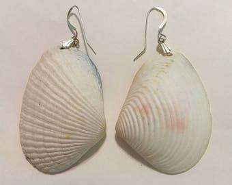 Large dangling white seashell earrings