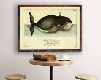 Whale Illustration, Whale Poster, Whale Vintage Art, Whale Print, Ocean Art, Nautical Wall Art, Coastal Wall Art, Vintage Zoological Print