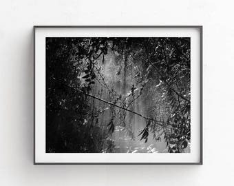 Dark wall hanging, Forest art, Digital photoshop background, Commercial use photography, Black and white wall art, 8x10 forest print, decor