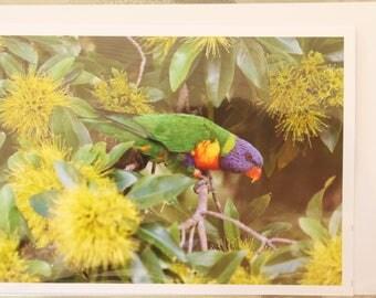 """Greeting Card """"Rainbow Lorikeet"""""""