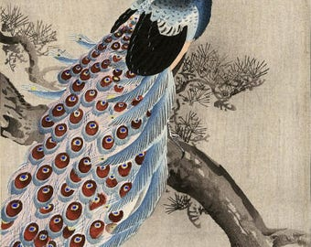 "Japanese Art Print ""Peacock on a Bough of a Pine Tree"" by Ohara Koson, woodblock print reproduction, fine art, asian art, cultural art"