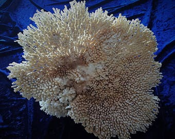 large delicate vintage dried coral