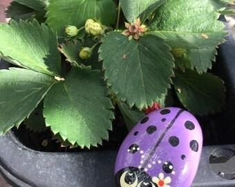 Purple Ladybug with a Daisy, Handpainted Rock - Lb8