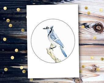 Blue jay art print | wall art | A4 | watercolor