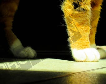 Calico Paws - Instant Digital Download - Printable - Fine art - Animal Photography
