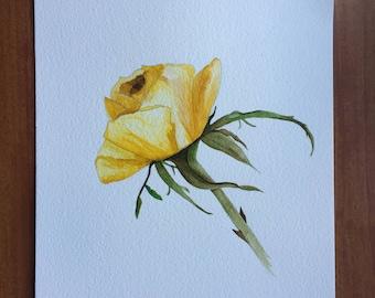 Yellow Rose Watercolour