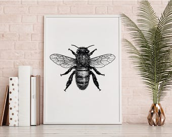 Bumble Bee Illustration Print Black And White Wall Art Printable Download