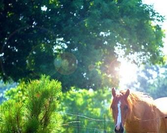 Brown Horse Digital Photo Download