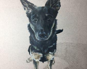 Custom Pet Portrait Colored Pencil