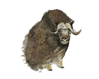 Musk Ox blank greeting card reproduction of my original watercolor and ink illustration drawing of Alaskan tundra animal