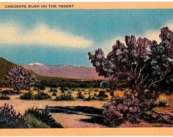 Vintage California Postcard - Creosote Bush on the Desert (Unused)