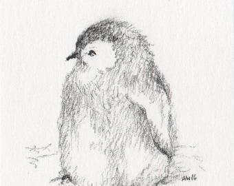 Little Penguin Chick - original drawing