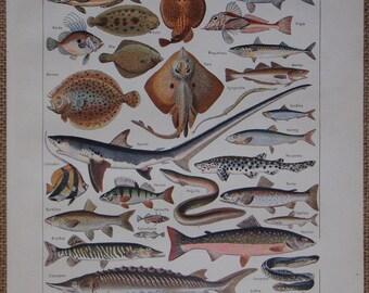 Vintage French original book print FISH 'Poissons' illustration by Adolphe Millot Nouveau Larousse Universel Published 1923