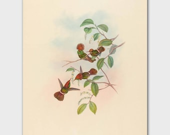 Country French Home Decor (Hummingbird Art, Bird Print) John Gould Red Birds Artwork