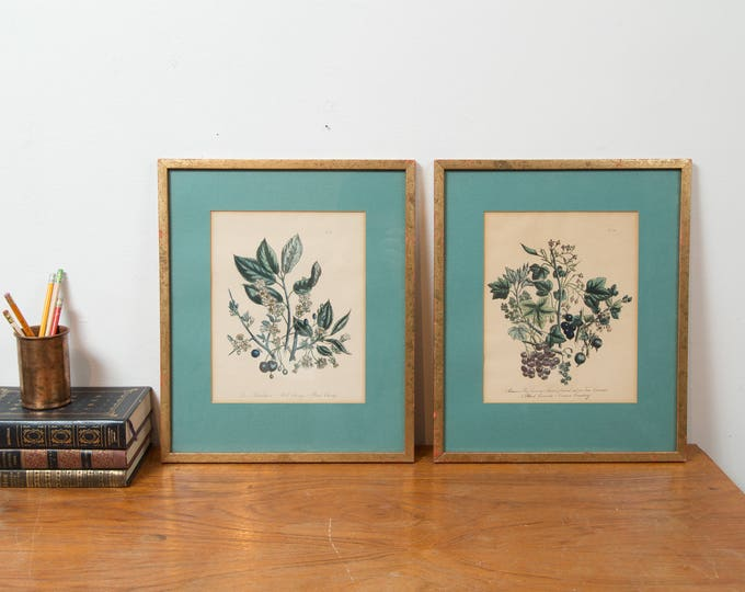 Antique Lithographs - Pair of Framed Prints of Berries, Leaves, Fruit and Flowers - Currant Branch Fruit Floral Artwork Illustrations