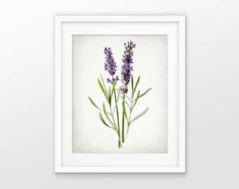 Lavender Plant Print - Lavender Plant Illustration - Vintage Botanical Flower Art - Lavandula Wall Art #2405 - INSTANT DOWNLOAD