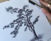 """Signed, limited edition print of a drawing from my """"Secret Life of Trees"""" project"""