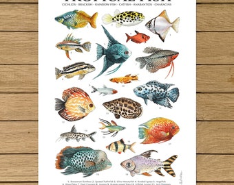 Tropical Fish, Poster, Giclée Print, Watercolor Illustration, A3 or A4 size