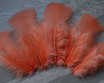 Set of 20 apricot colored Turkey feathers
