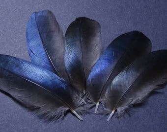 Set of 5 Pie fluff feathers