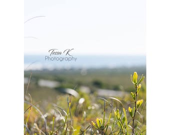 Looking through the Grass, Fine Art Photography Print, Multiple Sizes, Beach Photography