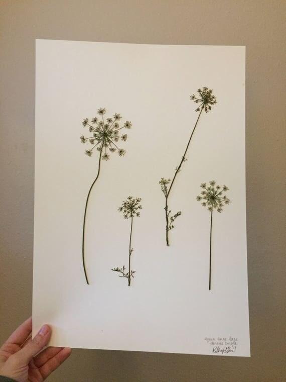 Queen Anne Lace Herbarium Art - Texas Wildflower- Real Pressed Flower Artwork- Botany Art-  Vintage Botanical Poster - Framed Floral Art