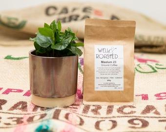 Coffee Houseplant Box