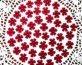 Dried pressed flowers, real dried  red verbena flowers  30 pcs.