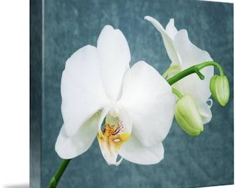 Zen White Orchids Canvas Art Print 16x12 Inch Canvas Print