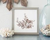 "12""x12"" Pressed Marine Brown Algae Print - botanical art, plant press, beach, coastal"