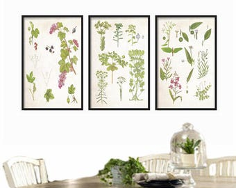 Botanical Print Set of 3 - Botanical Illustration- Wall Art Print - Vintage Botanical Prints - Posters - Farmhouse Decor - Rustic Decor
