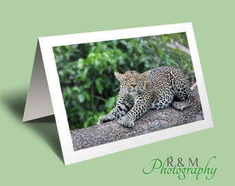 Leopard Greeting Card - leopard sleeping blank photo card, african big cat photo greeting card - stretching leopard