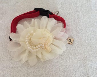 Cream flower organza dog collar , dog gifts ,  flower collar , pet collar , small dog , gifts , custom collars , cute collars , pet gifts