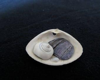 Tiny treasure shell with purple